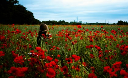 Dorothy In The Field Of Poppies: What the Wizard of Oz Can Teach Us About Opiate Use
