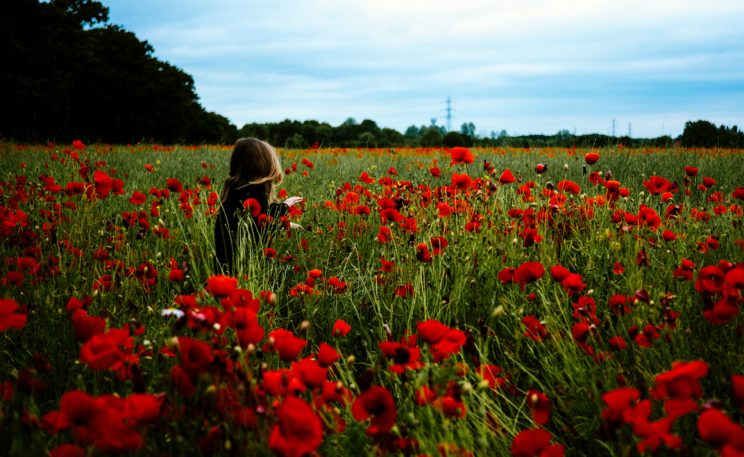 dorothy in the field of poppies